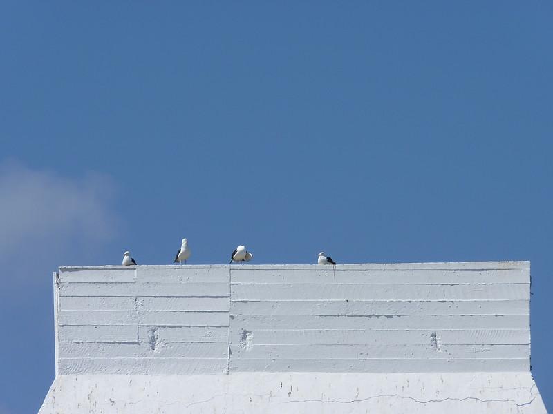 Artsy gulls