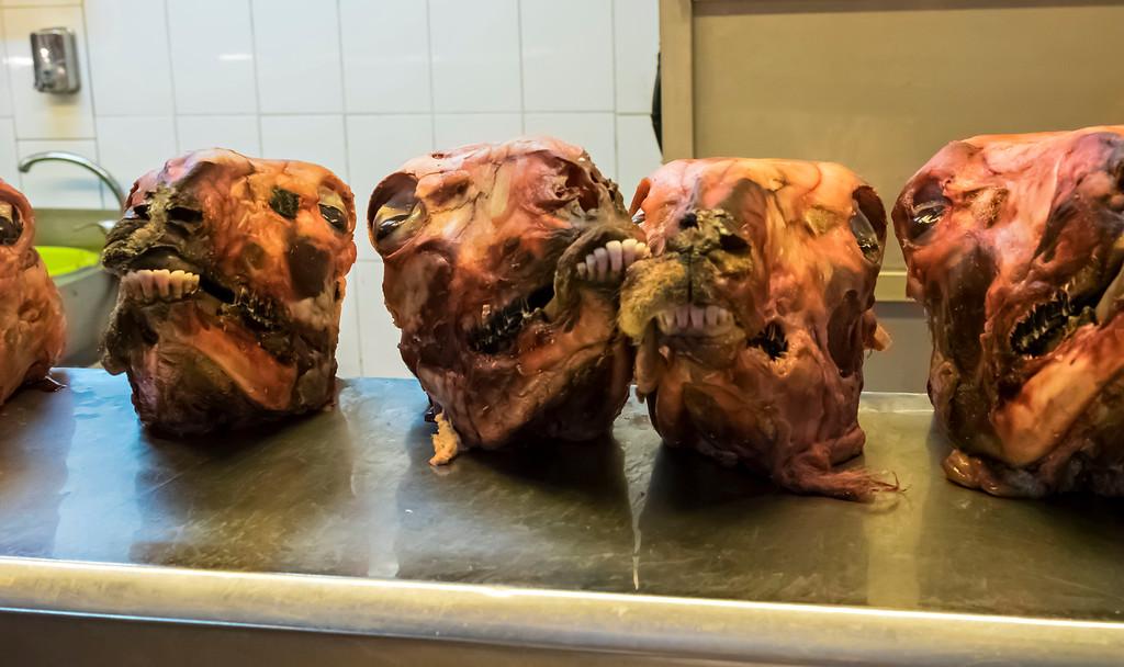 Sheep heads?