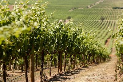 Indómita Winery, Casablanca Valley Wine Region, Chile