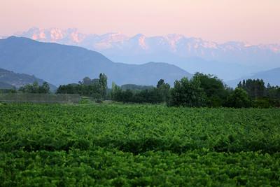 Andes Mountains, TerraViña, Winery, Valle Colchagua, Santa Cruz, Chile