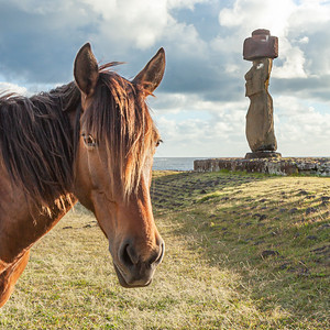 This horse has it's eys onAhu Ko Te Riku.  The most complete Moai and the only moai on Easter Island with eyes.
