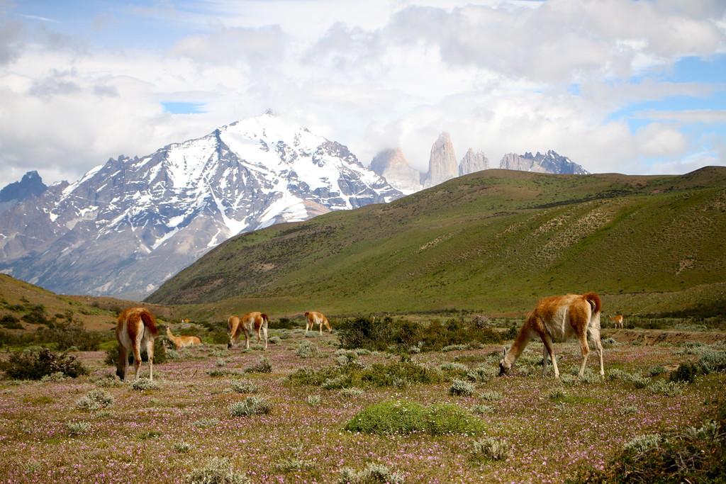 Torres Del Paine tour