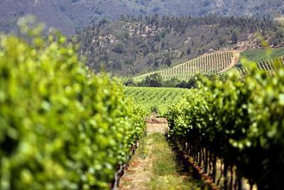 Casas del Bosque Winery, Casablanca Valley Wine Region, Chile