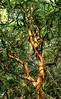 Rancho Rio del Sol ~ pretty tree