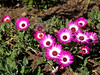 Frutillar ~ Vibrant flowers. These are real.