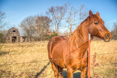 Horse in Danville, Oklahoma, USA