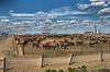 Nebraska Buffalo Farm