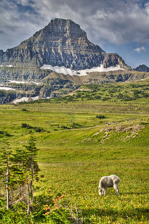 Logan Pass, Glacier National Park, Montana, USA
