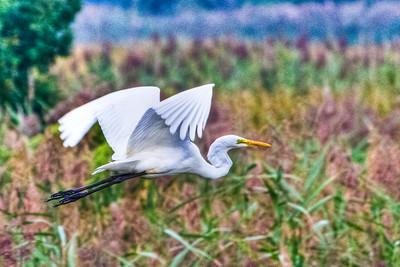 Bombay Hook National Wildlife Refuge, Delaware, USA