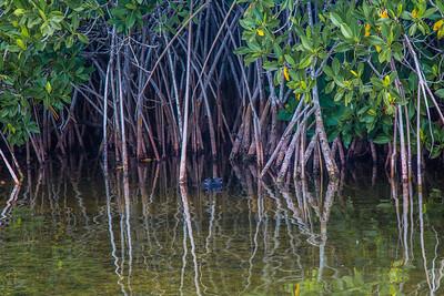 9 Mile Pond Area , Everglades National Park, Florida