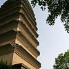 Wild goose pagoda and ginko tree