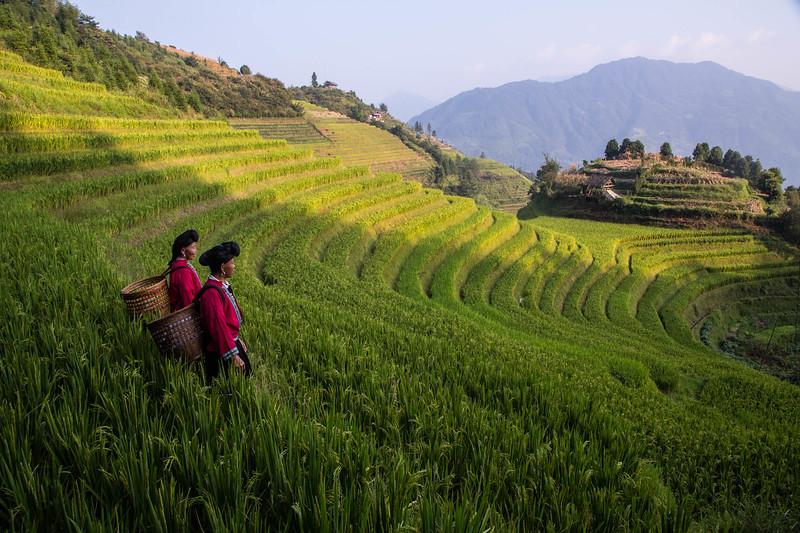 Yao Women: Rice Terraces