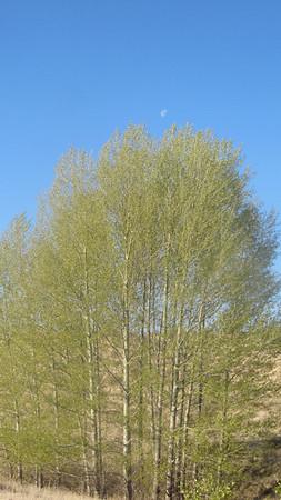 Grasslands of Inner Mongolia 【spring】