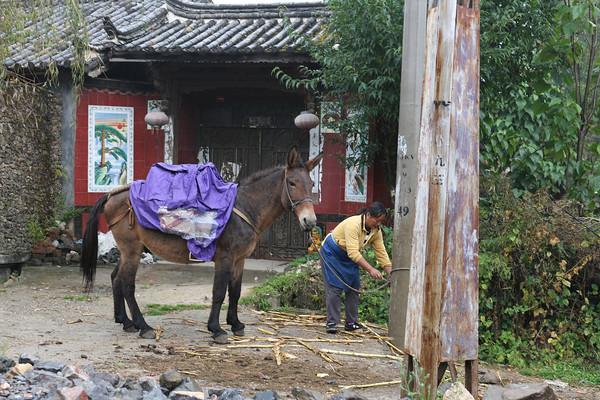 Baisha Village, Lijiang, Yunnan Province