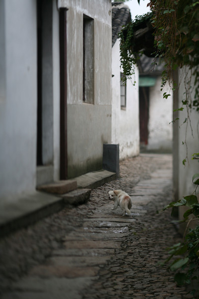 Dog, Zhou Zhuang, China