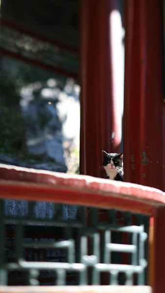 Black & White Cat, Beijing, China