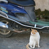 Cat and Scooter, Hong Village, near Huangshan, China