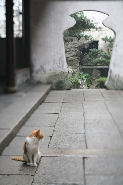 Cat and Doorway, Yu Garden, Shanghai, China