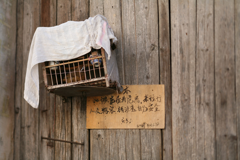 Myna Bird in Cage, Hong Village, near Huangshan, China