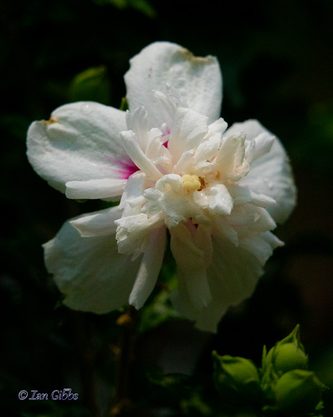 Beijing Flower #2