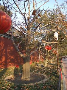 enceinte sud de Nanhai, le très grand parc du centre ville.