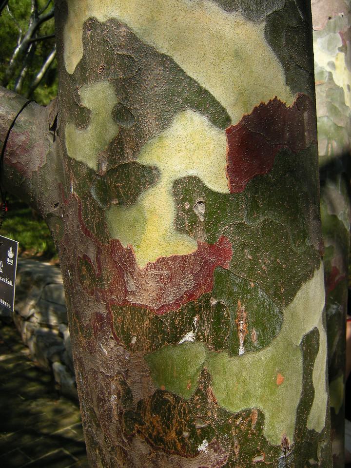 Summer palace trees 0808 (2)