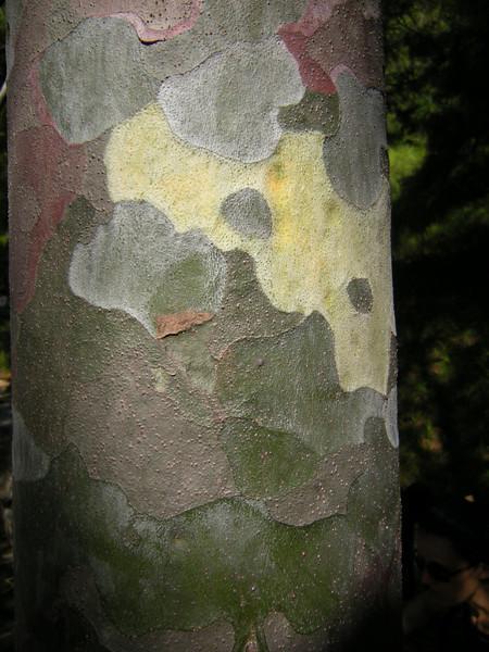 Summer palace trees 0808