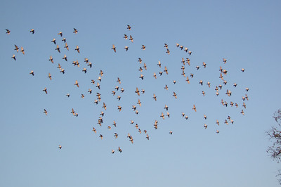 vol d'oiseaux dans le ciel au-dessus de Qianhai