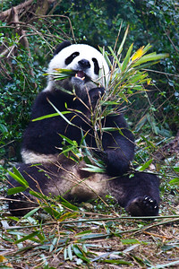 Chengdu-Panda-Breeding-Center-3