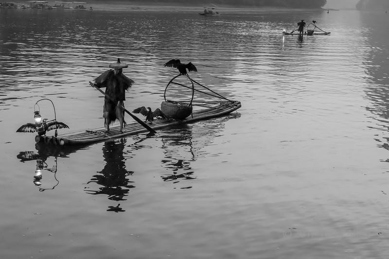 Three cormorants drying their wings, Li River, BW, Xingping, Guilin, China
