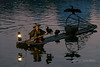 Working partnership between cormorant fisherman and his birds, Li River, Xingping, Guilin, China