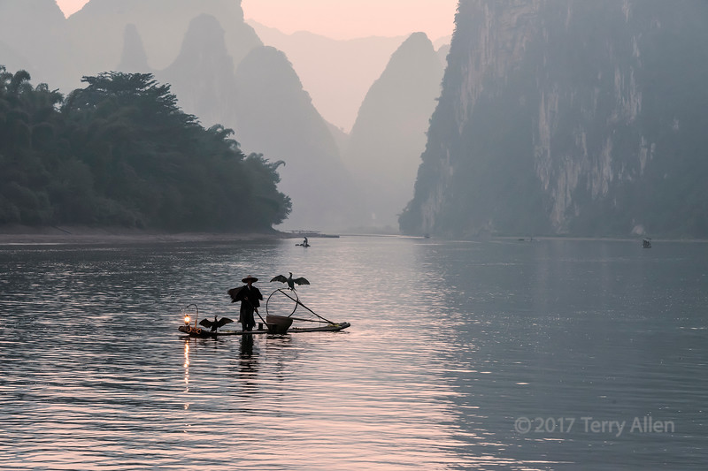 Fishing cormorants drying their wings, Li River, Xingping, Guilin, China