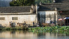 Late day activies on Nanhu Lake with horses and lotus plants, Hongcun Ancient Town, Lixian, Anhui, China