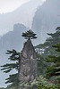Huangshan pine tree atop a pinnacle, Huangshan National Park, Anhui, China