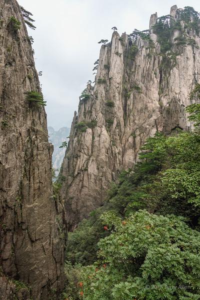 Granit cliffs and Rowan berries, Huangshan National Park, Anhui, China