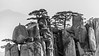 Huangshan pines (Pinus hwangshanensis),and granite pillars BW, Huangshan National Park, Anhui, China