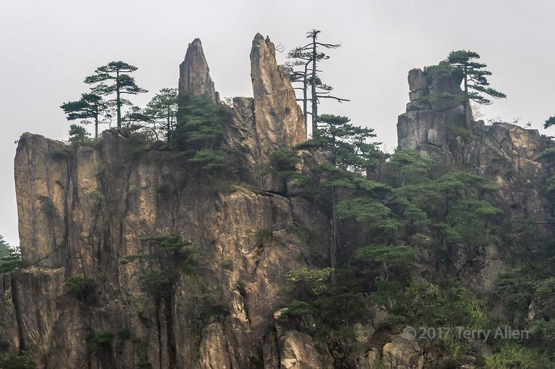 Granite cliffs and Huangshan pines (Pinus hwangshanensis), Huangshan Mountains, China