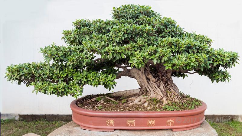 'South China Beauty'