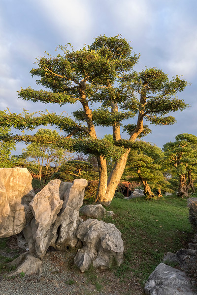 Bao Family Garden trees and rocks in the late day light, horizontal, Tanqyue, Shexian, China