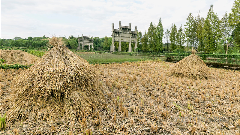 Hand-harvested wheat sheaves and Memorial Arches , Tanque, China