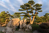 Bao Family Garden trees and rocks in the late day light, Tanqyue, Shexian, China