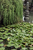 Water lilies and sculpture, Liu Yuan Classical Garden, Souzhou, China