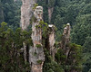 Close-up of the sandstone pillars and trees, Wulingyuan, Zhangiajie National Park, Hunnan Province, China