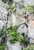 Trees growing out of an argillaceous limestone pillar, Tianzi Mountain Scenic Area, Hunnan, China