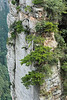 Argillaceous limestone pillar with colonizing trees and plants, Tianzi Mountain Scenic Area, Hunnan, China