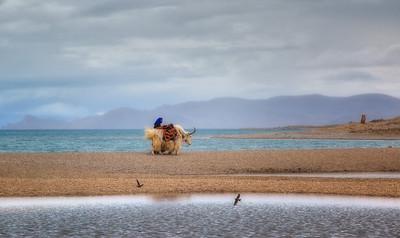 Namtso Lake,Tibet (纳木措)