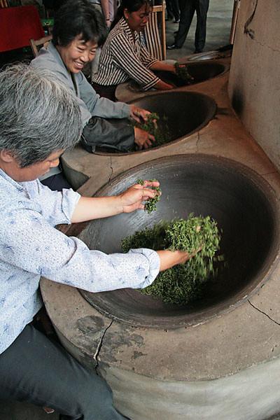 Firing Jingangshan Green Tea