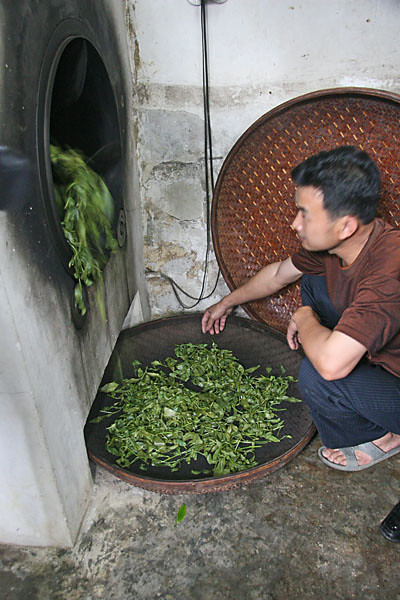 Primary Drying of Fresh Leaf
