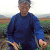 Plucking in a Gunpowder Tea Garden