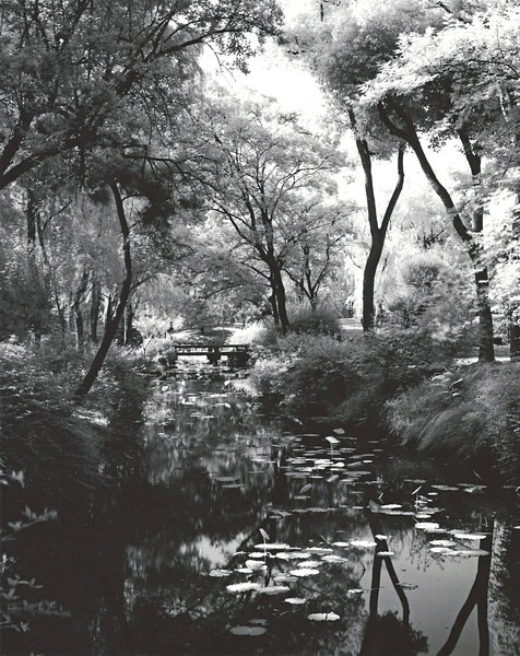 """Suzhou, Zhou Zheng Park. Called the """"Humble Administrator's Garden"""" this little bit of heaven indicated that the Administrator was not terribly humble. Shot with Rollei infrared film."""